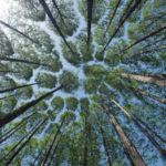 Heilkreis-web-enneallionce