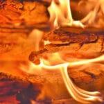 Trilogie Zorn - Feuerglut